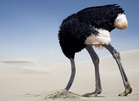 Ostrich1.jpg